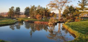 Northern Landscaping, Lawn Maintenance, Landscaping, Pond Landscaping, Backyard Pond